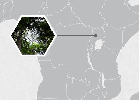 Budongo Forest Reserve, Uganda, East Africa