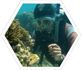 Volunteer on a diving project in the Great Barrier Reef