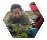 Volunteers recording forest-tundra vegetation