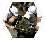 Help survey the inhabitants of the intertidal zone.