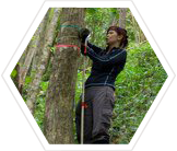 Earthwatch volunteer in Caribbean rainforest