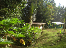 Rainforest accommodation, Casa de la Selva, Puerto Rico