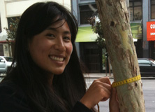 Measuring trees in San Francisco