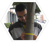 Tree measuring in San Francisco