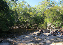 Freshwater creek, North Queensland, Australia
