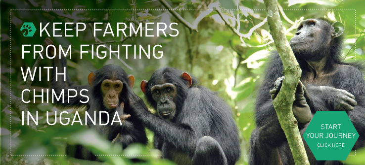 Keep farmers from fighting with chimps in the forests of Uganda