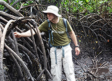 Dr. Mark Huxham in mangrove forest, Kenya