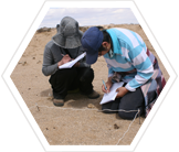 Volunteers recording vegetation, Mongolian steppe