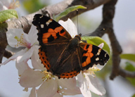 butterfly-science-research-earthwatch-india