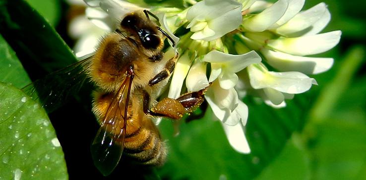 Observere Pollinators