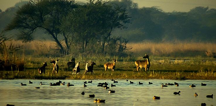 Observe India's Wildlife