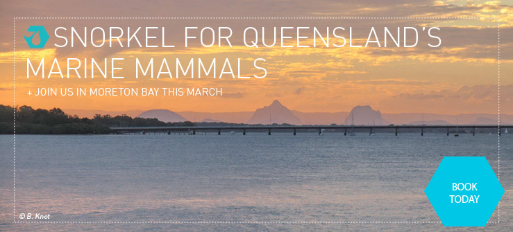 Can the dugongs, dolphins, and sea turtles of Moreton Bay survive Brisbane's boom? Help scientists find out.