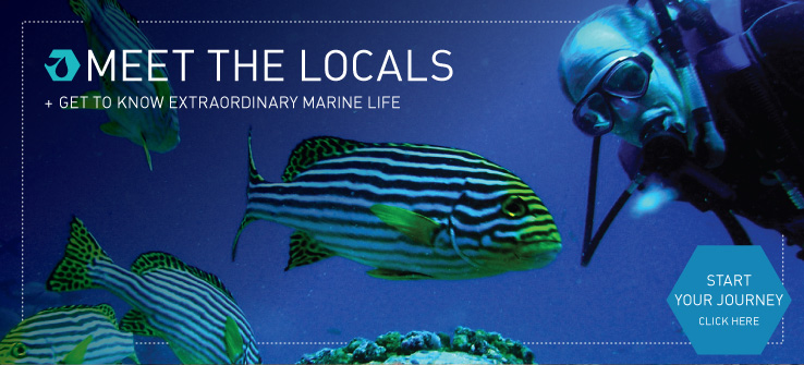Meet the Locals and Get to Know Extraordinary Marine Life