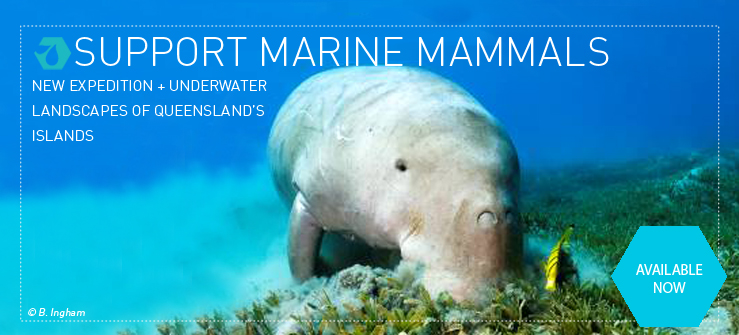 Investigate the beautiful dugong in Moreton Bay