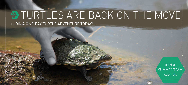 Join an Earthwatch one-day team and help us uncover Melbourne's freshwater turtle population.