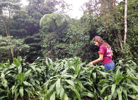 costa-rica-science-volunteer-research