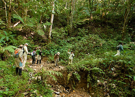 Volunteers survey trees, frogs, birds and lizards in the tropics.