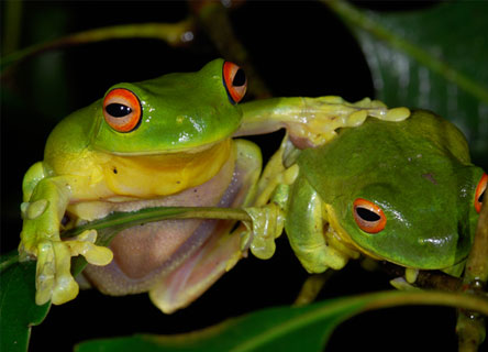 frog-science-research-earthwatch