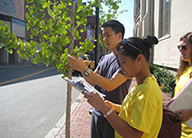 trees-boston-science-research