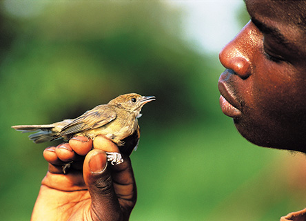bird-science-research-earthwatch