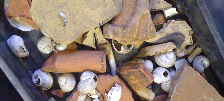 A collection of Roman artifacts found by Earthwatch volunteers in northern England.