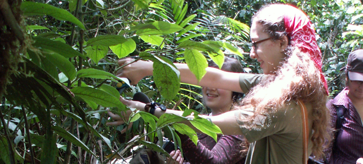 Volunteer looking for caterpillars on an Earthwatch research project in Costa Rica
