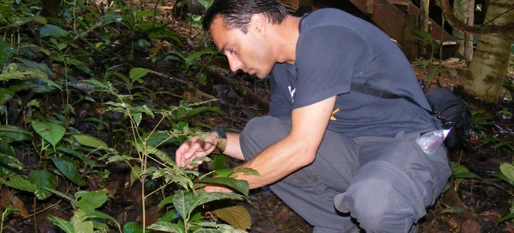Researcher looking for caterpillars in Costa Rican Rain Forest