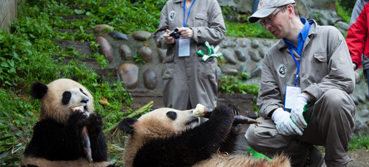 Research staff and pandas at the Ya'an Bifengxia panda base in China