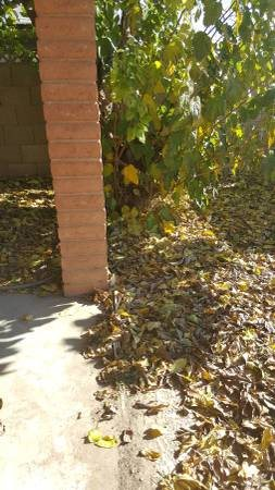 Backyard pool Leaf Cleanup Cover Photo