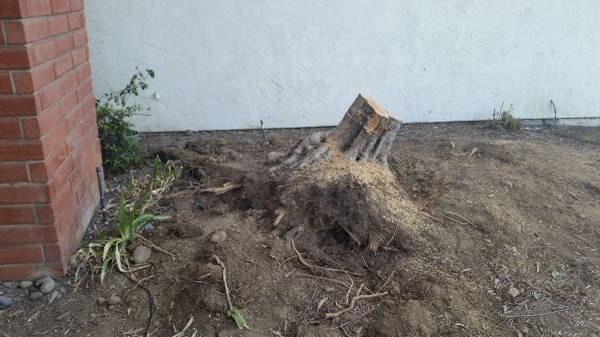 Tree Removal Cost per Tree