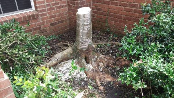 Tree Stump Removal  Cover Photo