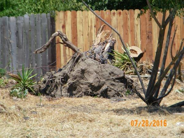 Tree Removal Cost Calculator