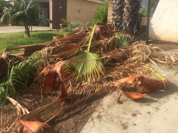 Need Palm Debris Hauled Away Cover Photo