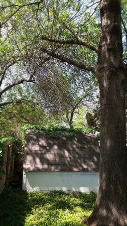 Trim Dead Branches 12 Ft Up And Cut Down 15 Ft Tree Cover Photo