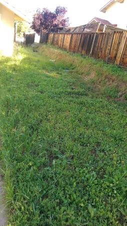 Weed grass Removal And Clean up Cover Photo