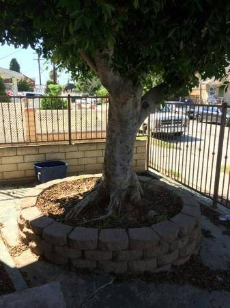 Cost To Remove Large Tree