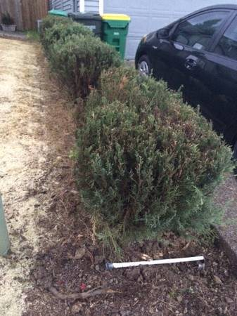 Tree And Shrubs Removal Cover Photo