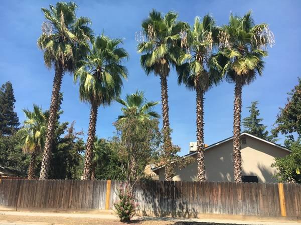Local Tree Removal Service