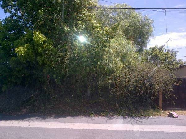 Tree Cutting And Shrub Cleaning Cover Photo