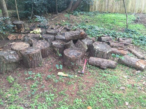 Firewood   Tree Trunk Picked up Cover Photo