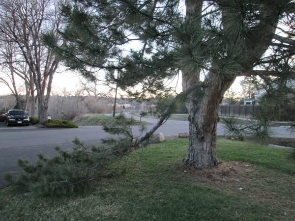 Tree Surgeon Costs