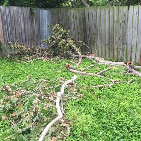 Remove Tree Branches From Yard    Cover Photo