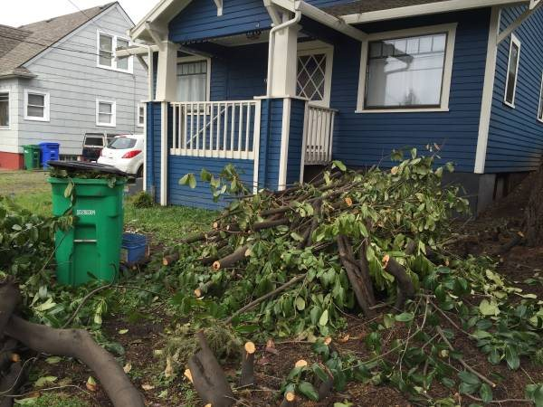 Need Yard Debris Hauled Away Cover Photo