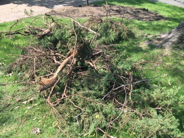 Shrubs branches dirt Debris Removal Cover Photo