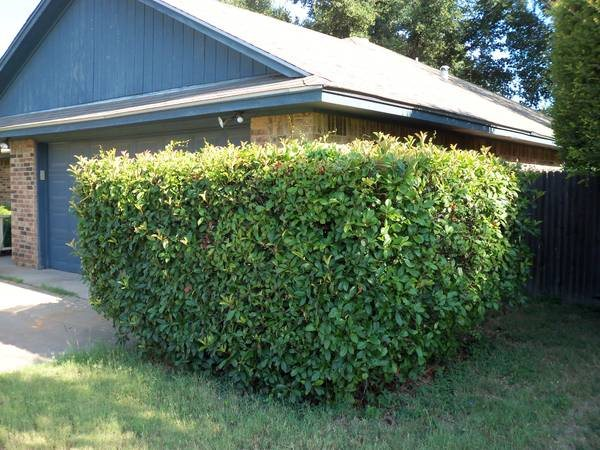 Need Hedges and 2 Trees Trimmed Cover Photo