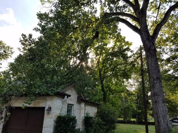 Tree Limb Removal Cover Photo