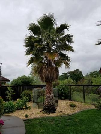 Tree Branch Removal