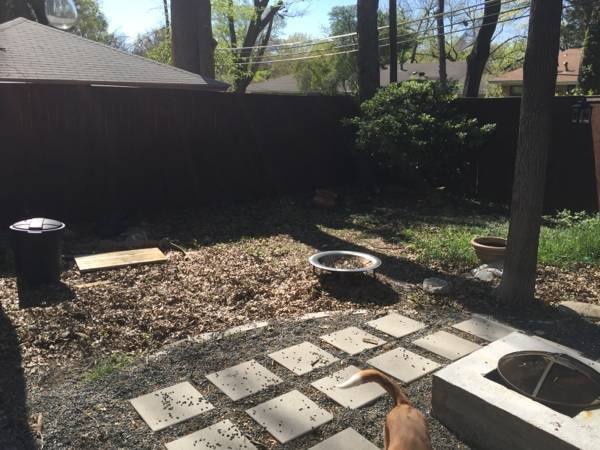 Leaves/Weeds Removed And Sod Put Down Cover Photo