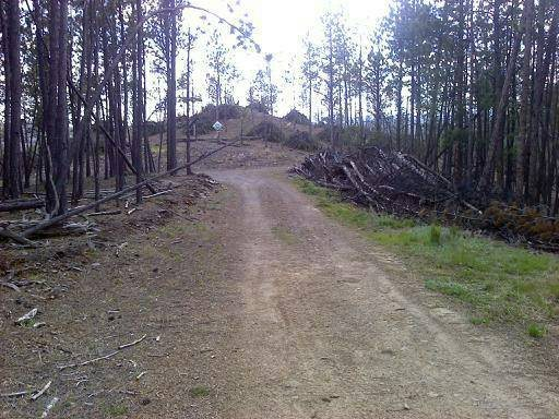Clearing of Downed Trees Cover Photo