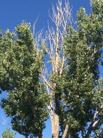 Need Tree Trimmed Cover Photo